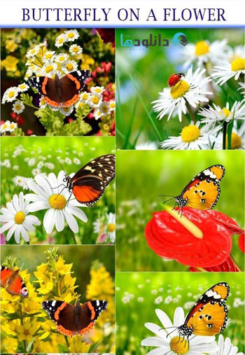 Butterfly-on-a-flower-Stock