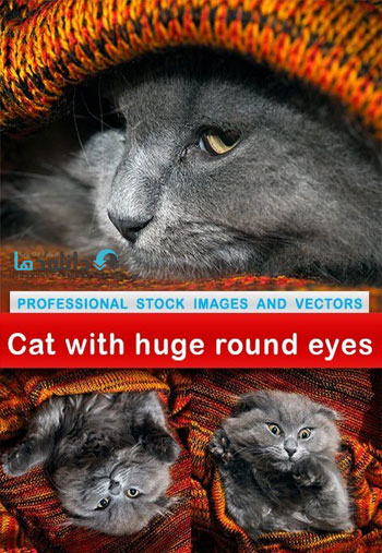 Cat-with-huge-round-eyes