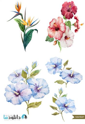 Cute.Watercolor.Drawing.Flo  دانلود تصاویر وکتور نقاشی آبرنگی گل های زیبا   Cute Watercolor Drawing Flowers