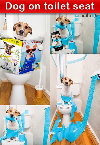 Dog-on-toilet-seat