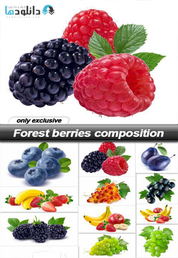 https://img5.downloadha.com/AliGh/IMG/Forest-berries-composition-Stock.jpg