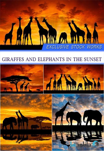 Giraffes-and-elephants