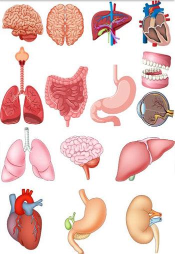 Human-Anatomy-2