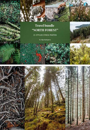 Bundle-North-Forest