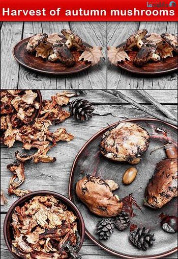 Harvest-of-autumn-mushrooms