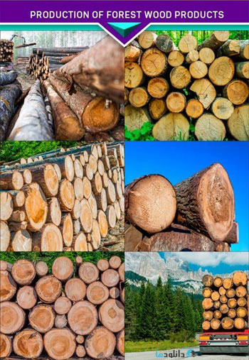 Production-of-Forest-Wood