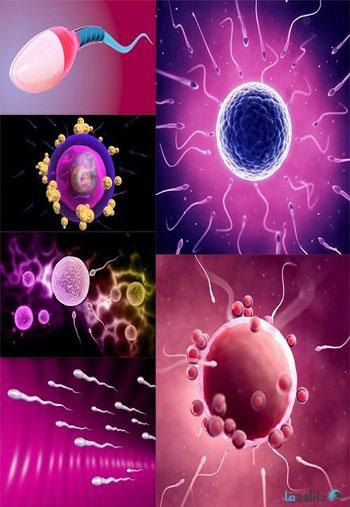 Sperm-and-egg