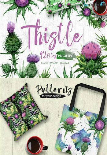 Thistle-flowers