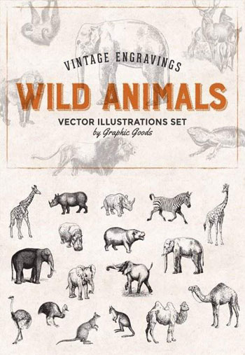 Wild-Animals-Engravings