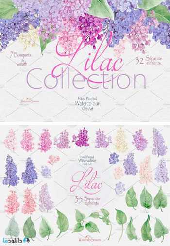 Lilac-Collection
