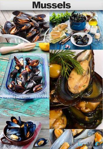 استوک-Mussels
