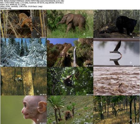 https://img5.downloadha.com/AliGh/IMG/Nature-Animal-Childhood-(20.jpg