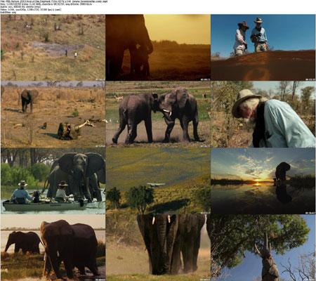 https://img5.downloadha.com/AliGh/IMG/PBS.Nature.2015.Soul.of.the.jpg