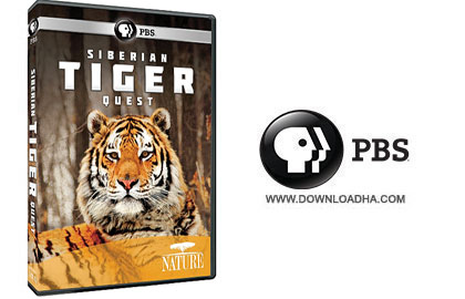 Siberian Tiger Quest دانلود مستند 2012 Siberian Tiger Quest