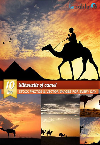 Silhouette-of-camel