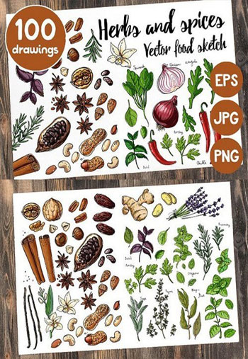 Sketches-herbs-and-spices