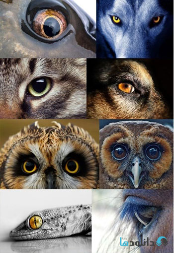 The-eyes-of-animals