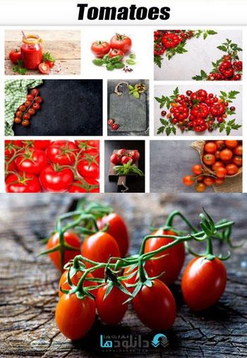 Tomatoes-Stock