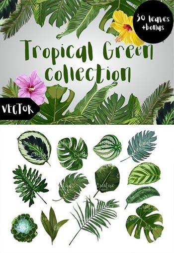Tropical-Green-Vector