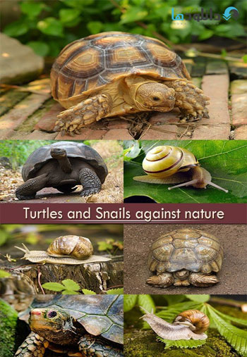 https://img5.downloadha.com/AliGh/IMG/Turtles-and-Snails-against-nature-Stock.jpg