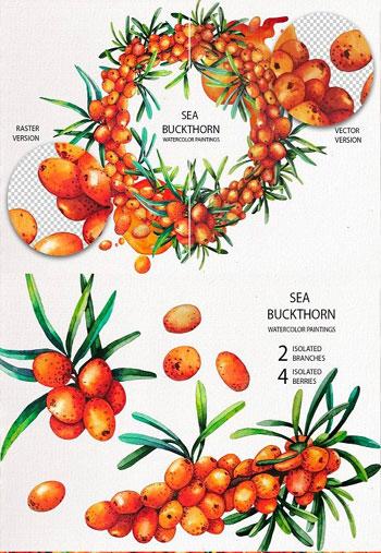 Watercolor-Sea-Buckthorn-18