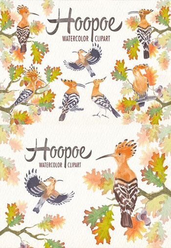 Watercolor-hoopoe-bird-clip