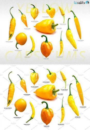 Yellow-Capsicums