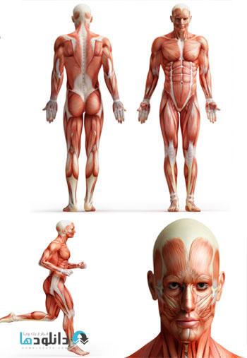 anatomy  دانلود تصاویر با کیفیت  Human Body Anatomy