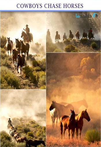 cowboys-chase-horses