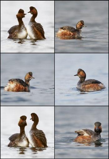 duck-shuterstock