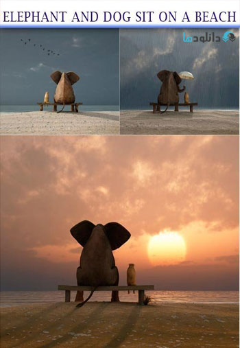 elephant-and-dog-sit-on-a-beach