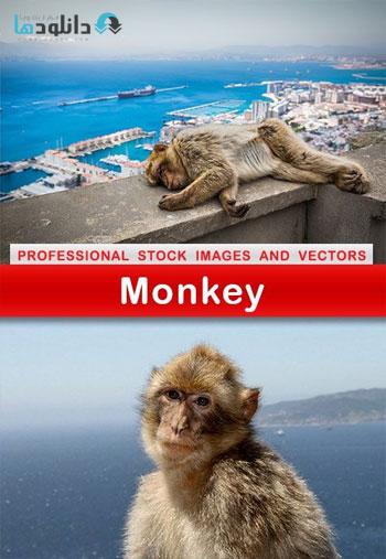 monkey-shutter-stock