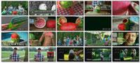 SKIN A WATERMELON party trick ss s%28Downloadha.com%29 دانلود کلیپ ترفند زیبای کندن پوست هندوانه
