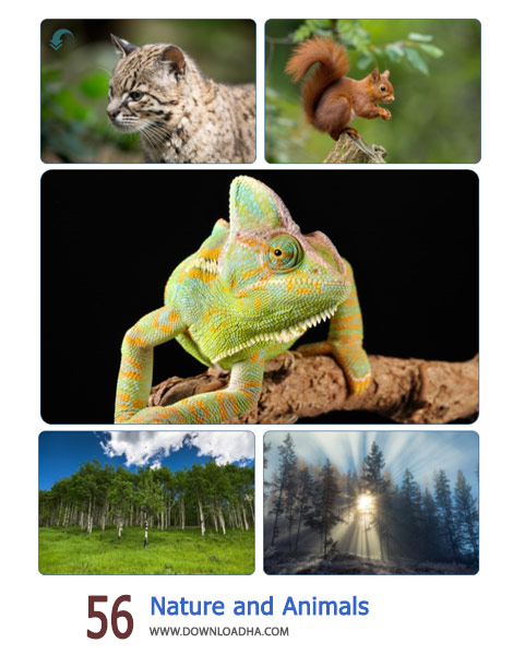 56-Nature-and-Animals2-Cover