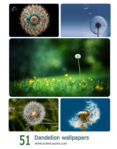 51-Dandelion-wallpapers-Cover