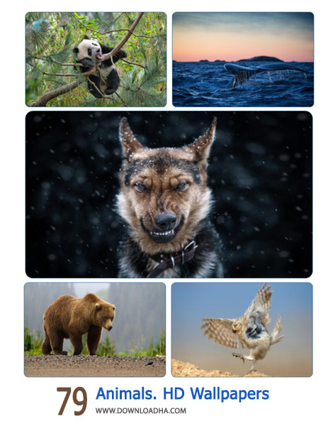 79-Animals.-HD-Wallpapers-Cover