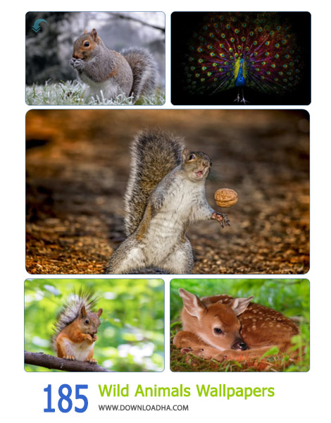 185-Wild-Animals-Wallpapers-Cover