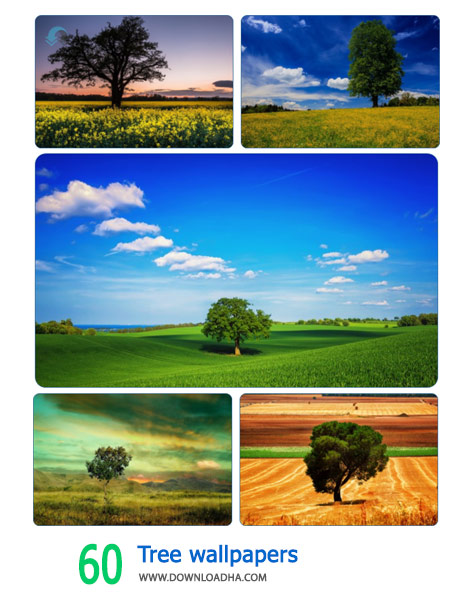 60-Tree-wallpapers-Cover