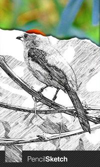 Pencil-Sketch-Screenshot-1