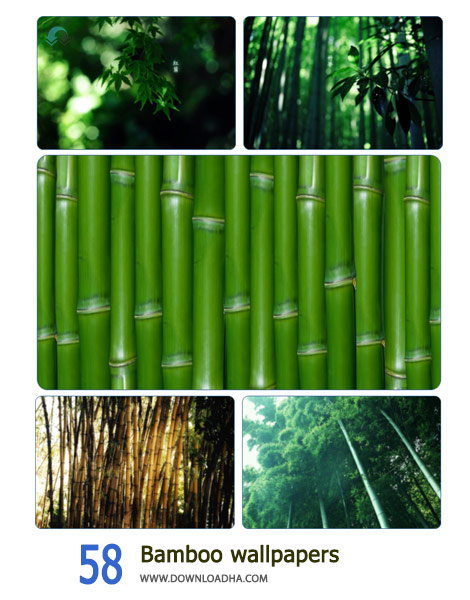 58-Bamboo-wallpapers-Cover