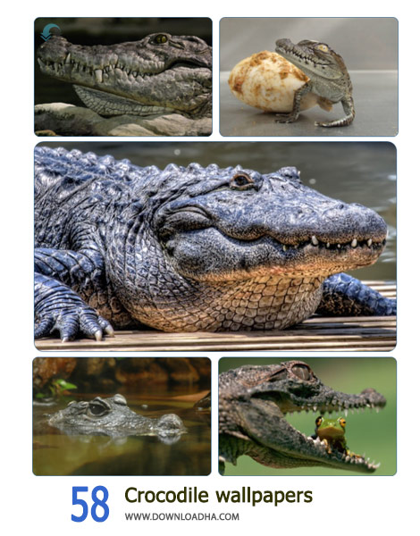 58-Crocodile-wallpapers-Cover