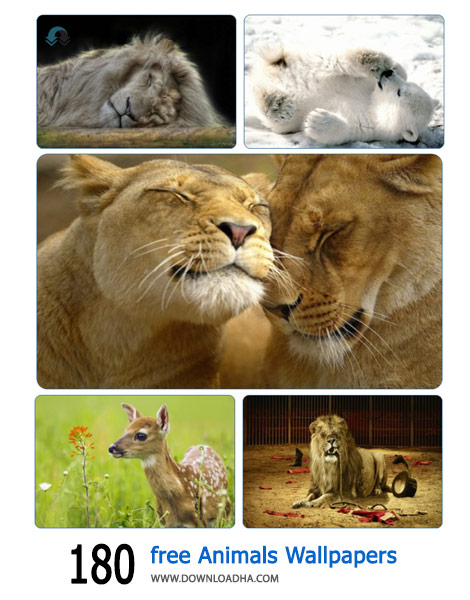 180-free-Animals-Wallpapers-Cover
