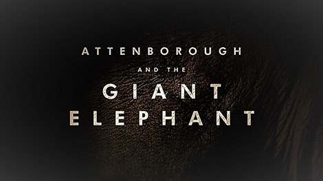 دانلود-مستند-BBC-Attenborough-and-the-Giant-Elephant