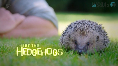 دانلود-مستند-Channel-5-Meet-the-Hedgehogs