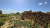 دانلود-مستند-BBC-Turtle-Eagle-Cheetah-A-Slow-Odyssey