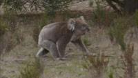 دانلود-مستند-ITV-Australian-Wilderness-with-Ray-Mears