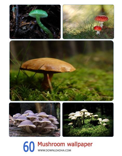 60-Mushroom-wallpaper-Cover