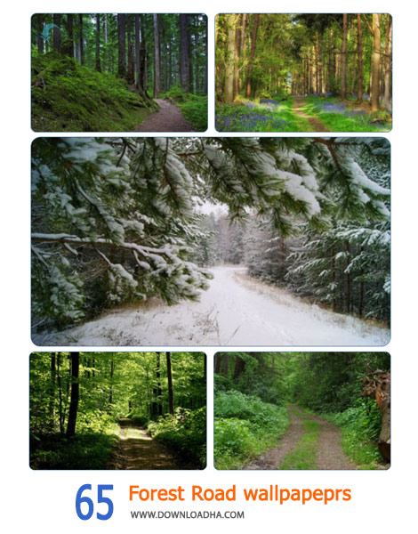 65-Forest-Road-wallpapeprs-Cover