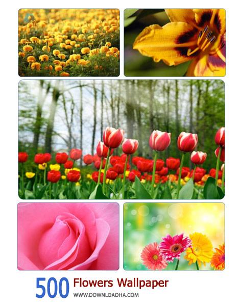 500-Flowers-Wallpaper-Cover