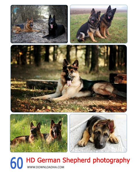 60-HD-German-Shepherd-photography-Cover